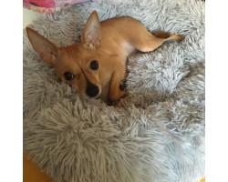 Лежанка Сплюшка для кошек и собак до 10 кг. (60 см.)