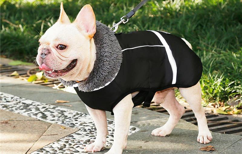 Зимняя водонепроницаемая куртка для собак